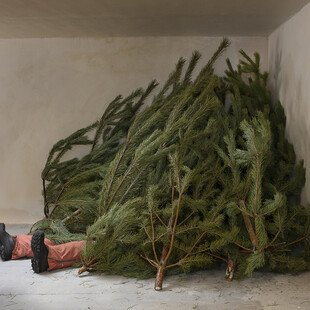 A man's legs poke out from underneath a pile of Christmas trees
