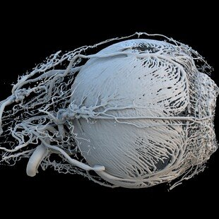 One of the winning images for the 2017 Wellcome Image Awards. A 3D model of a healthy mini-pig eye by Peter M Maloca, OCTlab at the University of Basel and Moorfields Eye Hospital, London; Christian Schwaller; Ruslan Hlushchuk, University of Bern; Sébasti