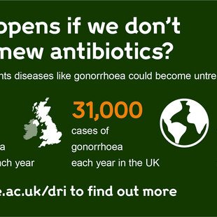 Infographic about what will happen to gonorrhoea infections if we don't develop new antibiotics