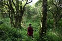 A man stands in the centre of lush green trees and plants in Mau Forest, Kenya.