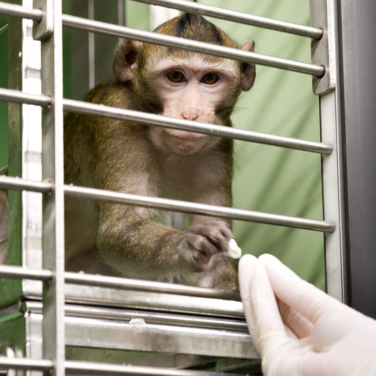 Image of a monkey in a page