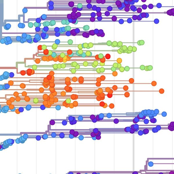 Detail from data showing real-time tracking of Ebola virus evolution
