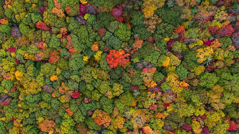 Aerial view of a colourful forest